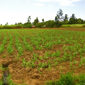 Western Seed field thumbnail