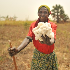 GADC Cotton farmer