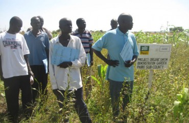 A group of farmers who work with GADC to grow sesame